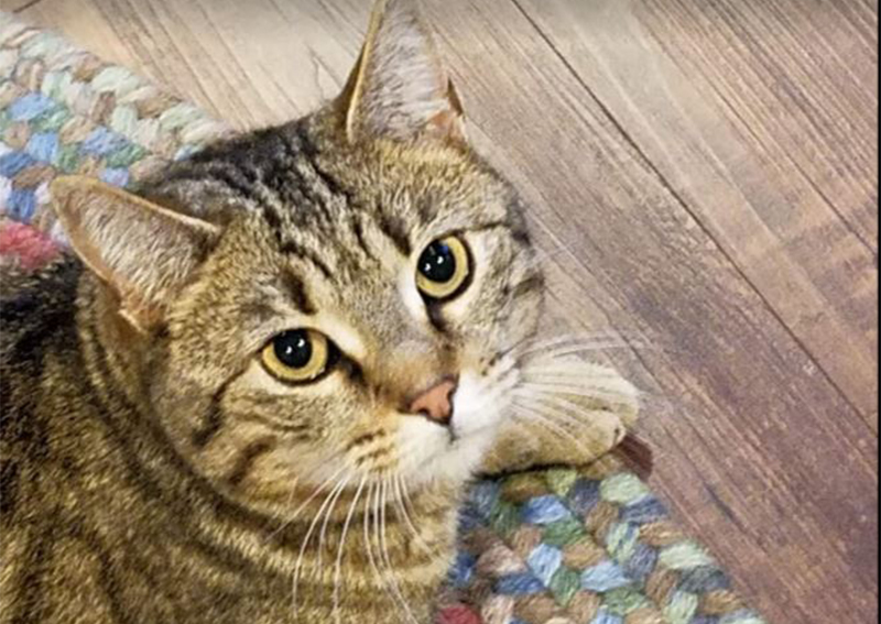 Cat Veterinary Care, Fisherville